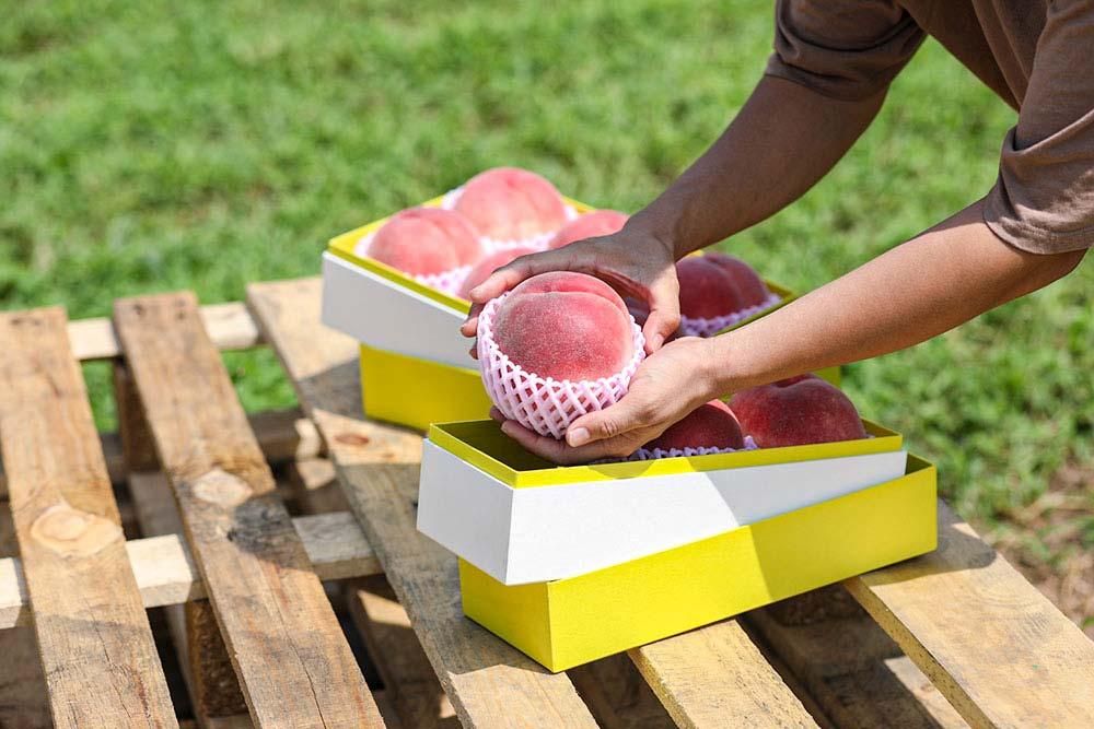 パッケージから農業を変える、農業女子、農産物、桃、もも、モモ、ギフト、贈り物、貼り箱、化粧箱、ブランド価値、ブランド資産